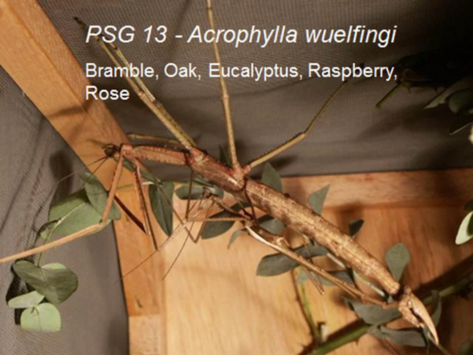 The Phasmid Study Group (PSG) - The Earth Life Web